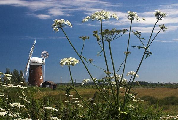 Horsey Mill by pfairhurst
