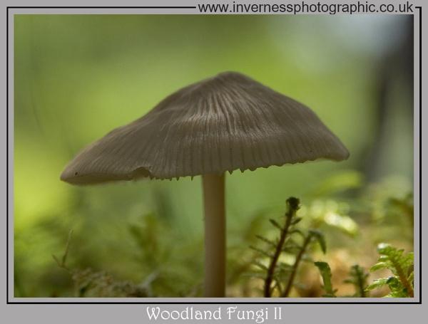 Woodland Fungi II by jjmills