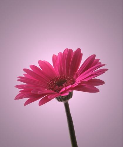 Flower by Trev_p