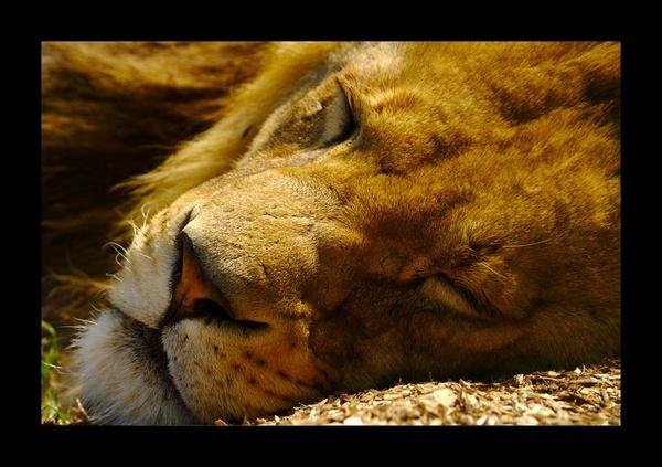 Sleepy by yasika