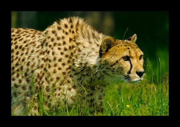 Hunting by yasika