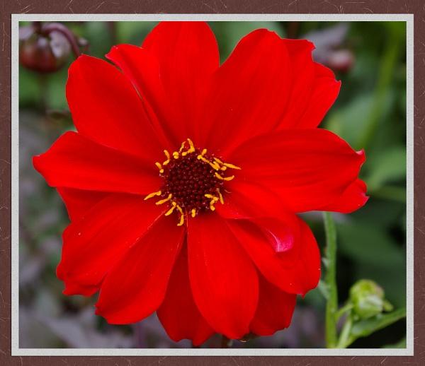 Red by brayzo