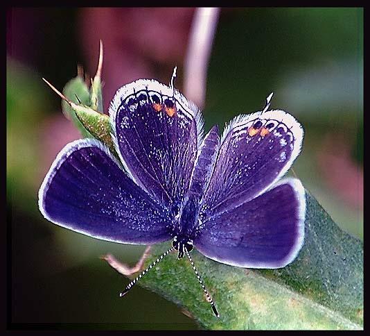 Blue by bdettmer