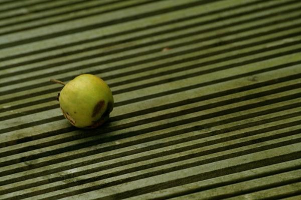 One Bad Apple! by Bradfleet12