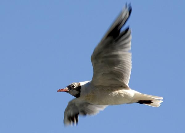 Flight by jage