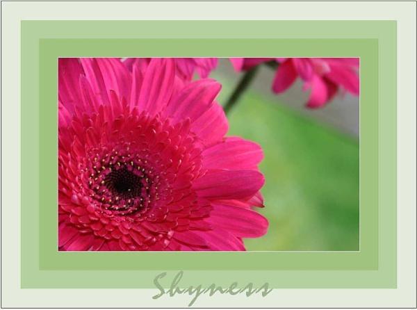 Shyness by daringdaphne