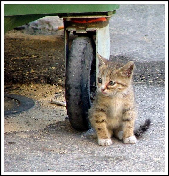 Stray Kitten by br