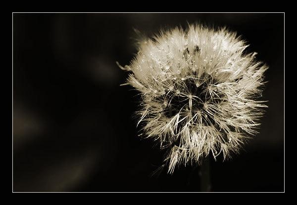 Flower in Mono by webjam