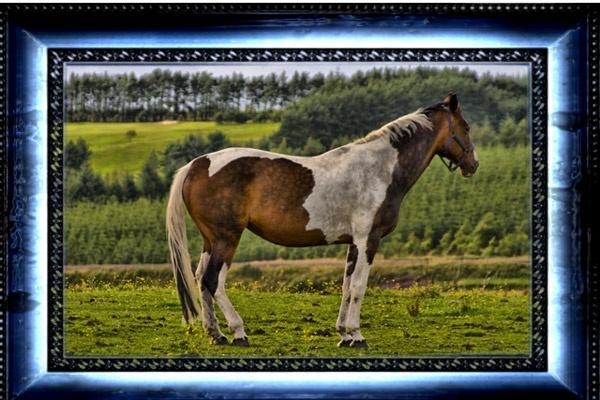 Classic Horse by CraigF