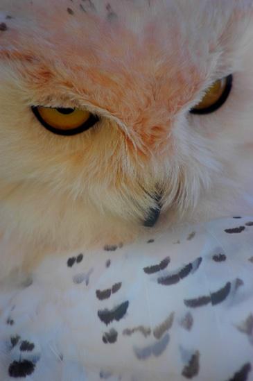 Owl by AEasthope67