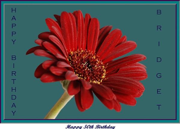 Happy Birthday Bridie by jmw58
