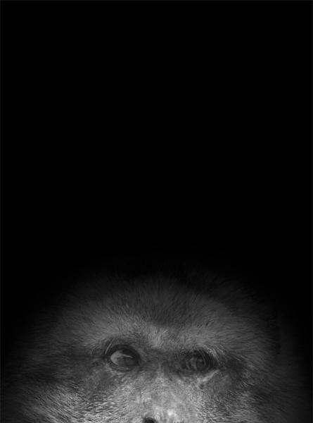 Monkey by GaZn