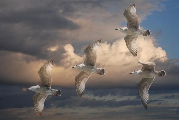 Gulls by stevebidmead