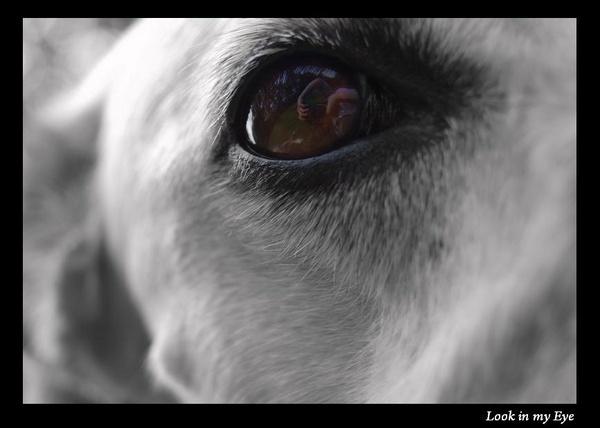 Look in my Eye by S_Boulding