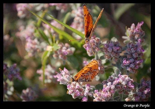 Orange & Purple by S_Boulding