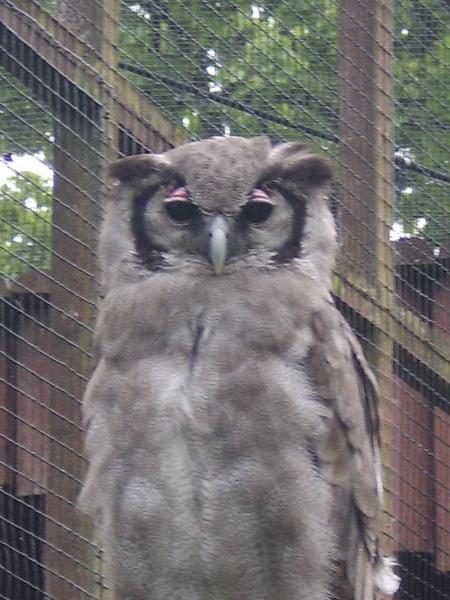 Wise Old Owl by XxJenny_SheaxX