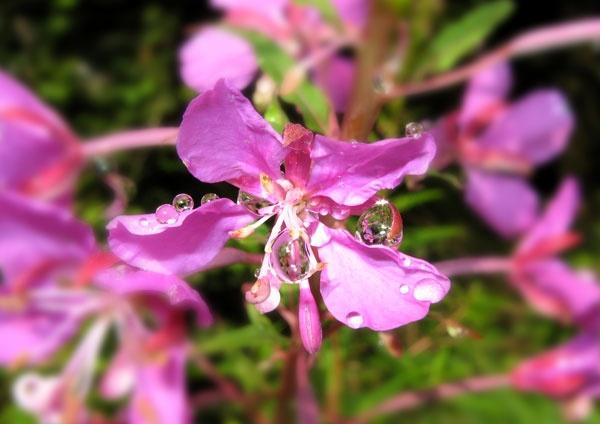 Raindrops by JOHNFRANCIS
