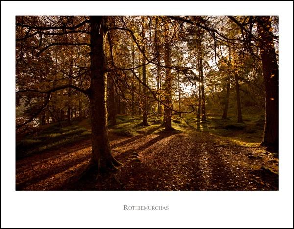 Rothiemurchas... by Scottishlandscapes