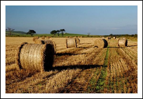 summer harvest by dven