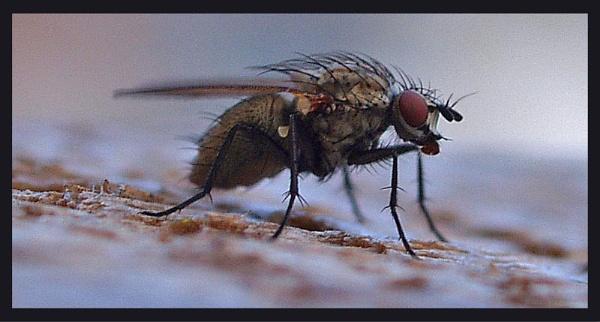 Yuc Fly by nicos