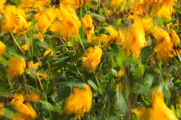 Blur of Yellow by pj.morley