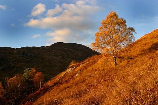 golden tree by john thompson