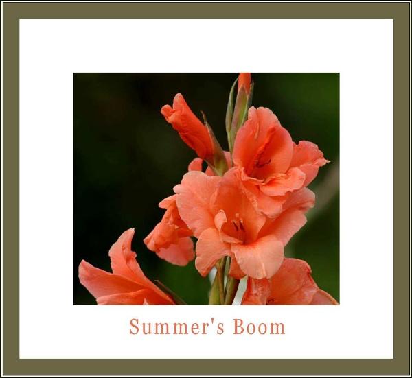 summer\'s boom by daringdaphne
