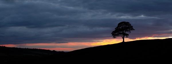 Maple Sunset by ian.daisley