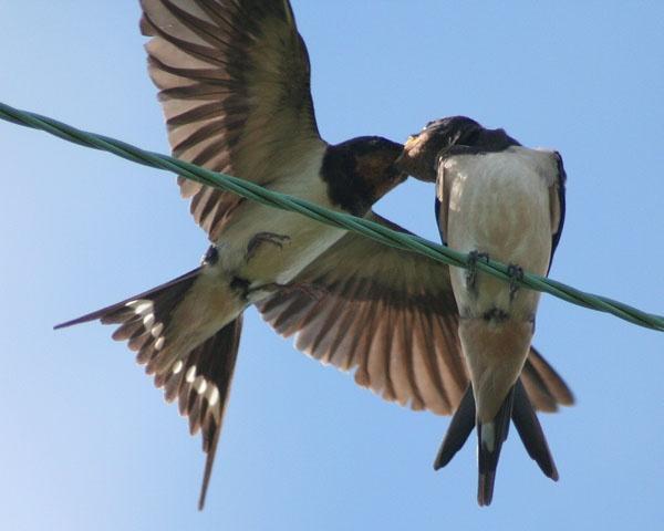 swallows 2 by Matthew_Leyshon