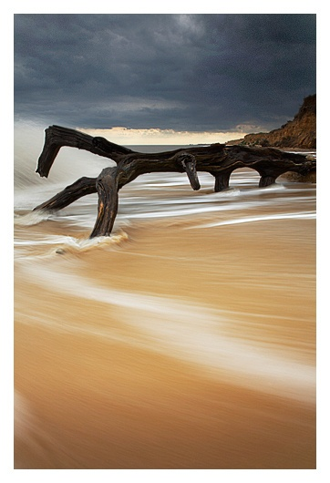 Driftwood by Chriscj