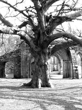 Old Man Tree by snookyboos
