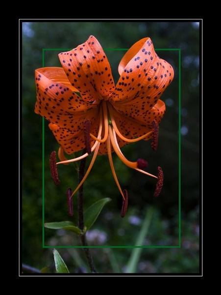 Orange Bloom by SeanyP