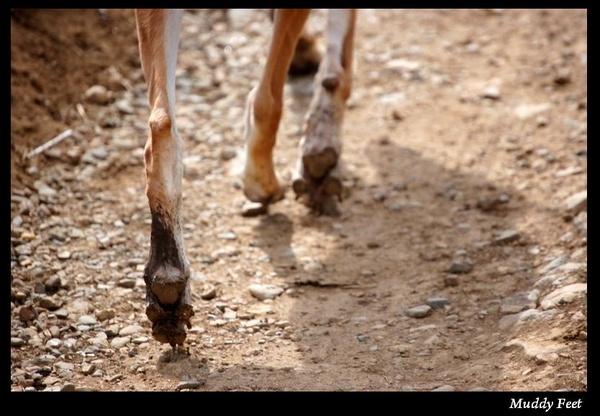 Muddy Feet by S_Boulding