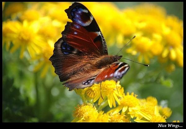 Nice Wings by S_Boulding