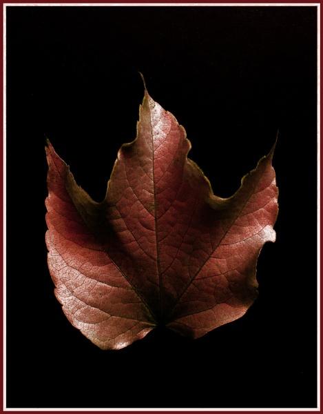 Leaf IV or IIa by theeyesoftheblind