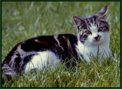 My Cat . . . by derekv