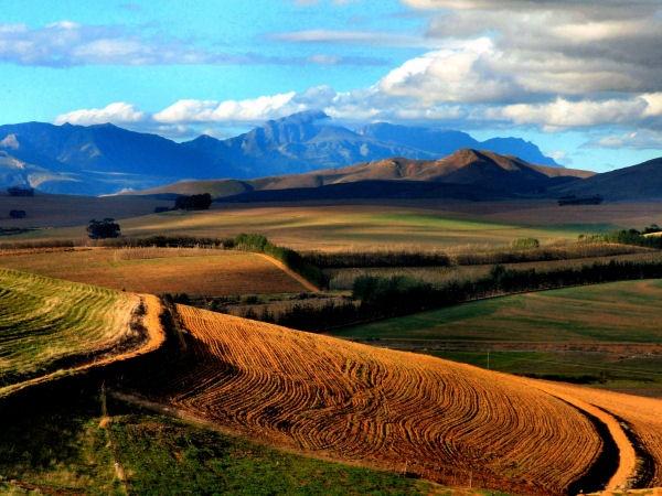 Wheatfields by JohanSmidt