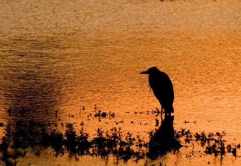 night fishing by john thompson