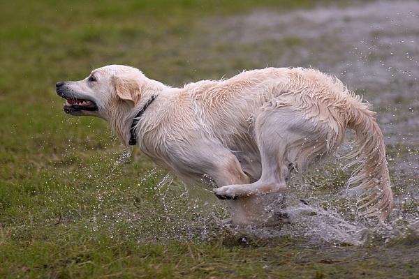 Joy of Running (2) by conrad