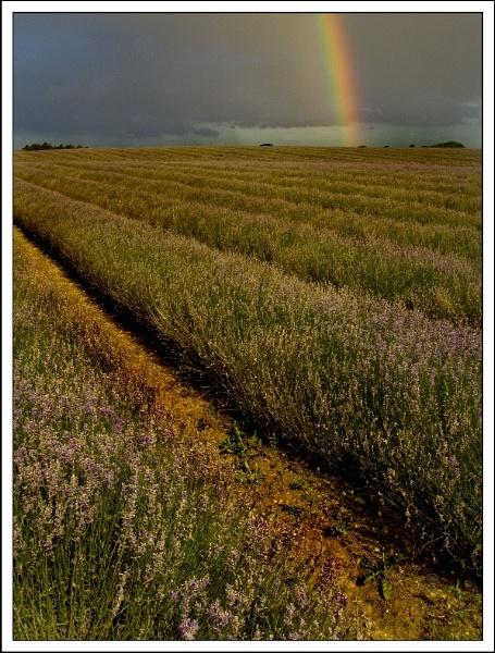 Lavenders Rainbow by ShaunL