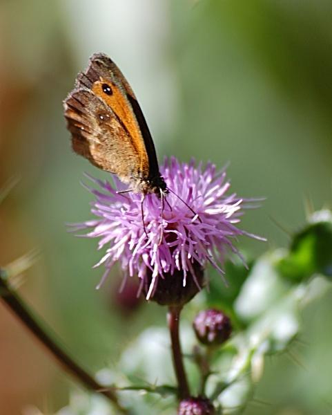 Butterfly Effect by ian_w