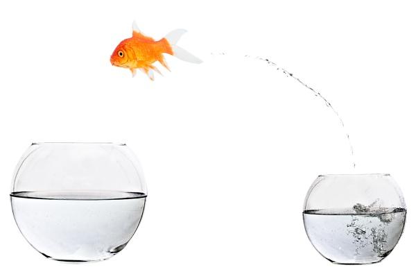 Something Fishy by Henchard