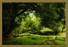 Paradise England