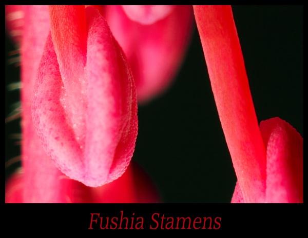 A Fushia\'s Dangley Bits. by Paintman