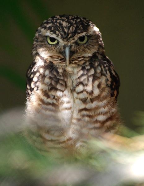 OWL by stevebidmead