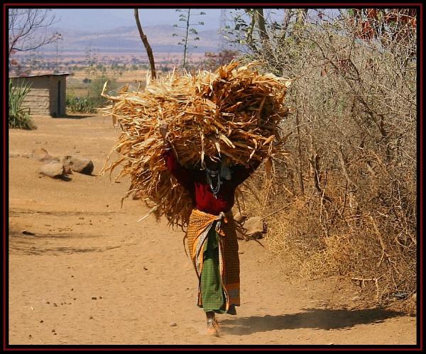 Masai Mara by GrahamBaines
