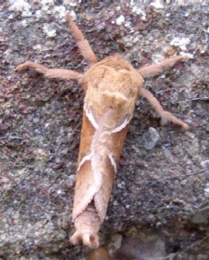 Moth by Isleman