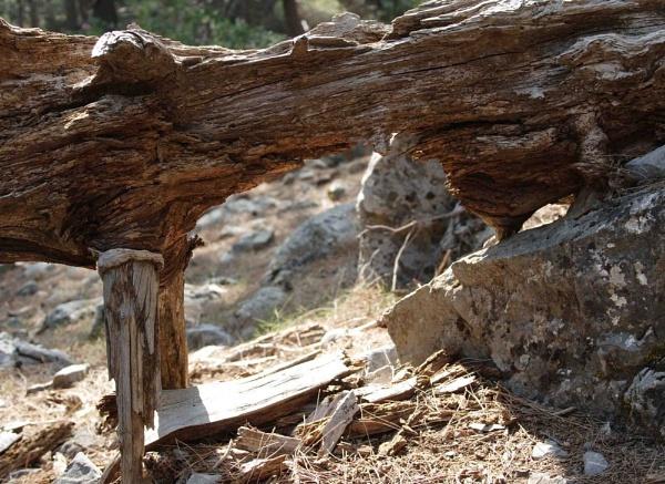 Tree Stump in Samaria by msumyk