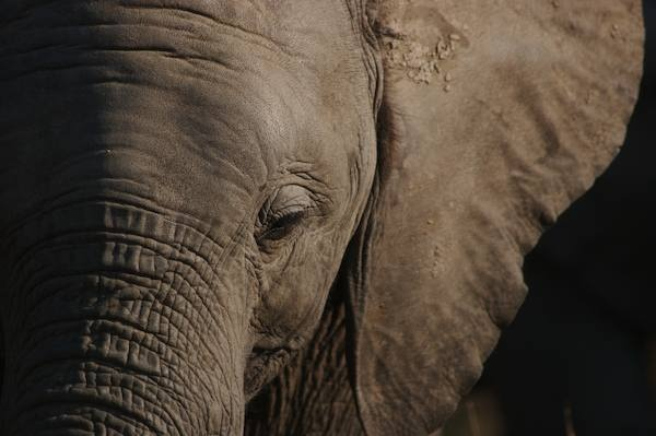 Young Elephant by jamess