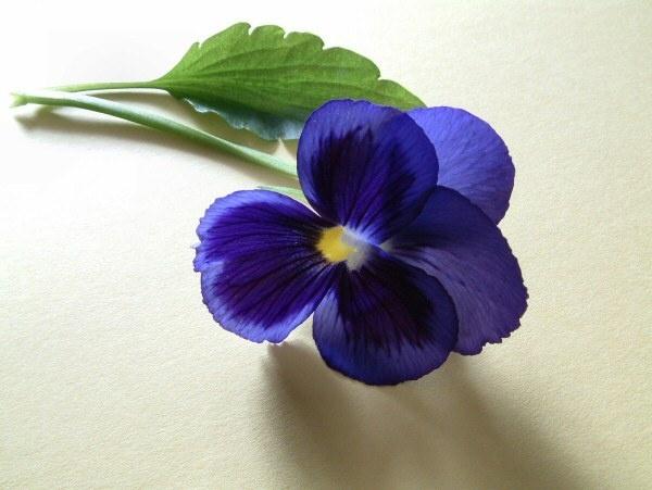 Blue-Viola by Arty